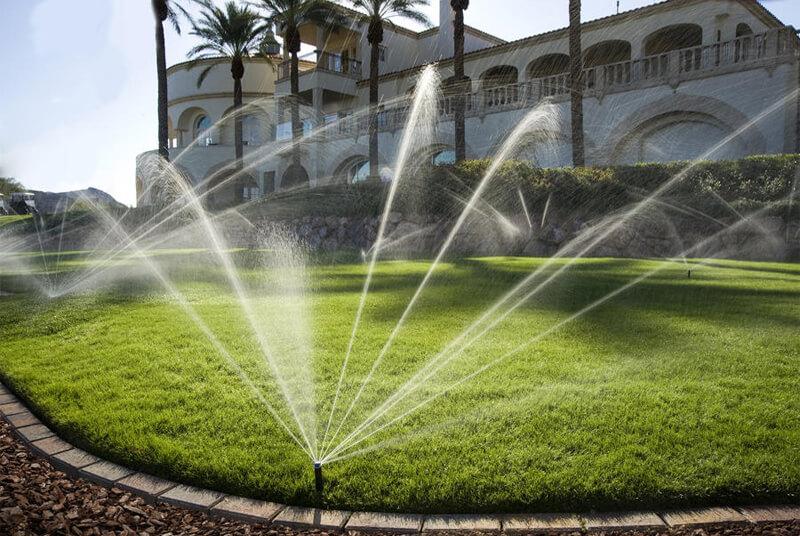 Tưới cây phù hợp với môi trường thời tiết